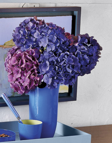 Blue-Hydrangeas-In-Blue-Vase-GTL0107-de