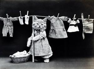 cat dressed